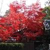 京都、曼殊院へ