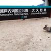 ウサギかわいい「大久野島」