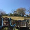 公園遊びと桜