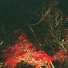 石山寺紅葉ライトアップ