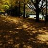 昭和記念公園でBBQ