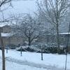 雪のsurrey