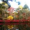 紅葉 は今が見頃 ~軽井沢 雲場池~