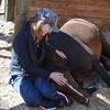 馬の癒しを提供する施設がカナダにあるんですね