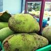 インド、バンガロールで3月の旬な果物☆