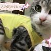 【飼い主様募集猫ちゃん②】食欲旺盛 ※里親様決定!
