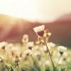 美しい世界観に圧倒される曲14選!〜春本番!花より団子より美メロ〜
