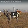 ケニアの首都ナイロビ近くの野生動物の楽園
