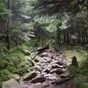 苔とキノコの北八ヶ岳トレッキング① 縞枯山〜茶臼山