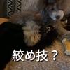 2021.6.4 【実行犯はバロン‼️】 Uno1ワンチャンネル宇野樹より