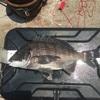 高浜店発 堤防ウキフカセで黒鯛を釣ろう!