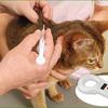 奄美市で飼い猫へのマイクロチップの装着支援事業を実施!マイクロチップ装着費用の全額を助成!!(奄美市に登録している飼い猫のみ対象) (316日目)