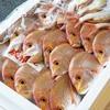 2020年7月4日 小浜漁港 お魚情報