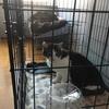 【先住猫と新入り猫】【多頭飼いの相性】