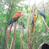 【ガラパゴス旅行記】(6)グアヤキル イグアナ公園と熱帯の動物園