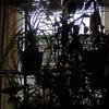 冬越し中の観葉植物
