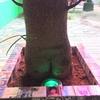アート旅9 はちゃめちゃアートのエロイ木と世界一カッコイイ盆栽の展示の仕方