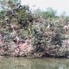 タイで動物園、サファリワールドはオススメ