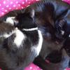 今日の黒猫モモ&白黒猫ナナの動画ー895