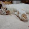 #猫にホットカーペット