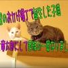 家族の一員になった子猫、竜太郎