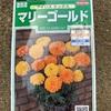 夏咲き花のタネをまきました✨