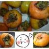 台風一過 落ちた柿の実