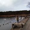 白鳥を見に行ってきました お幕場大池公園