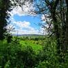 ブログでイギリスのデヴォンの緑のガーデンを一緒に散歩しよう【ブログで旅してる気分】