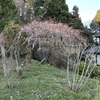春はそこまで・・・・・。