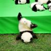 【癒し度MAX】かわいい23匹の子どもパンダ