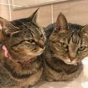 猫ばか日記☆ピノとレモ