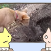 タイ、兄弟の遺体を埋葬する犬の動画が切なすぎると話題に