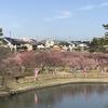 岡崎市南公園の梅まつりに行ってきた