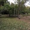 梅林の草刈り(^-^;