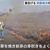 春の訪れ告げる阿蘇地方の野焼き始まる