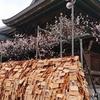 103 東京の梅の花見