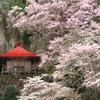 那須町芦野の名勝「堂の下の岩観音」に行ってきた!