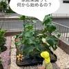家庭菜園!おいしい野菜が収穫できる~最低限やること3つ!の巻~