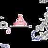 論文要約No2. -ホスト-ゲスト化学-『有機ケージで不安定な白リンを捕捉!』