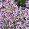 5番ドックは花の寿命が長い植物の宝庫