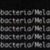 krakenによるメタゲノムデータの超高速なtaxonomyラベリング