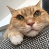 猫が近くにいると心がポカポカするってお話