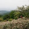 六甲山で久しぶりの山登り