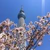 スカイツリー〜牛嶋神社〜向島百花園
