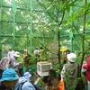 清瀬・オオムラサキの飼育施設や柳瀬川を見る