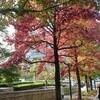 秋、深まりて🍁…『ヨナス・カウフマンコンサート』