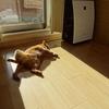 猫さんは暖かい場所がお好き