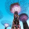 【シンガポール旅行記】(1)シンガポール動物園とガーデンズ・バイ・ザ・ベイ