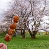 山形桜花 2